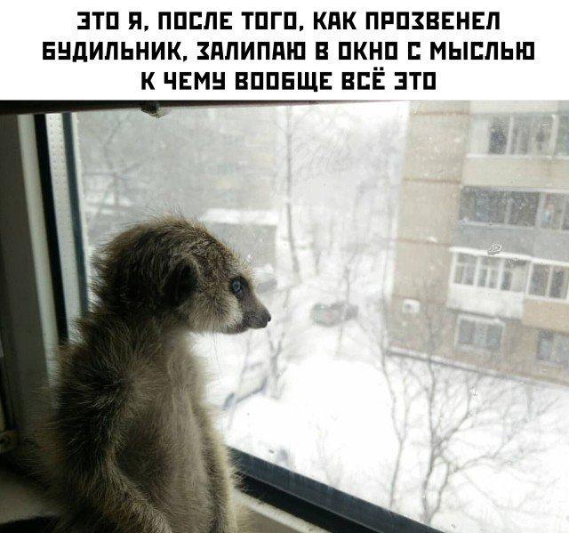 Я утром возле окна