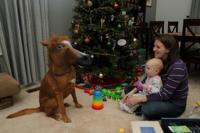 Собака в маске лошади