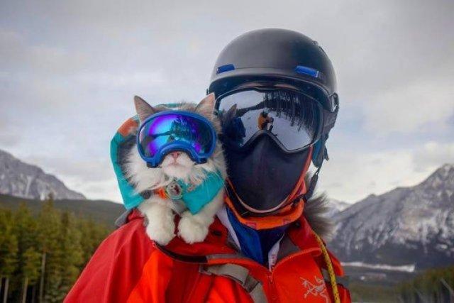Кот-лыжник