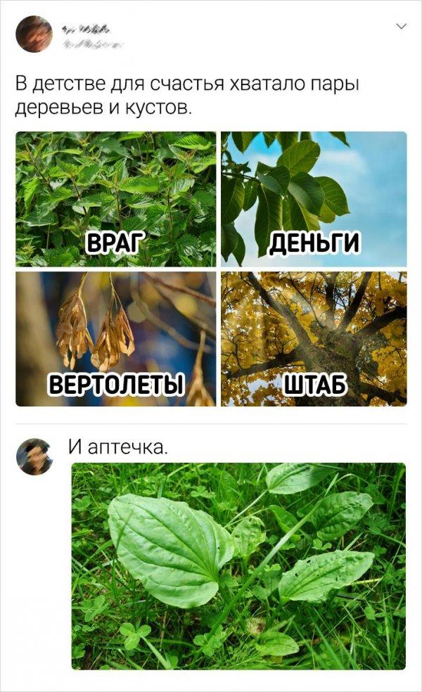 твит про деревья