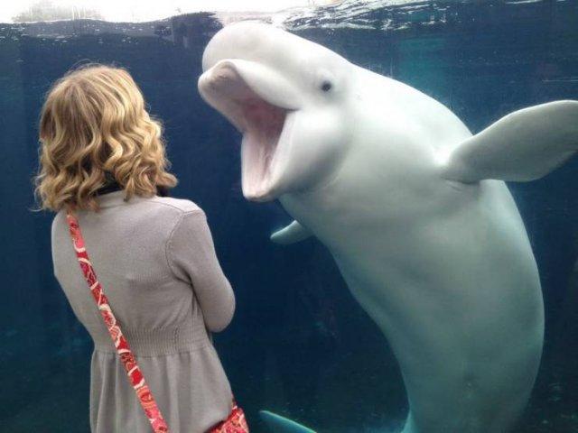 Дельфин и девушка