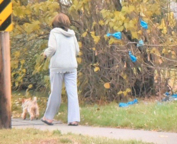 Женщина убирает за своей собачкой, но пакеты регулярно не доносит до мусора