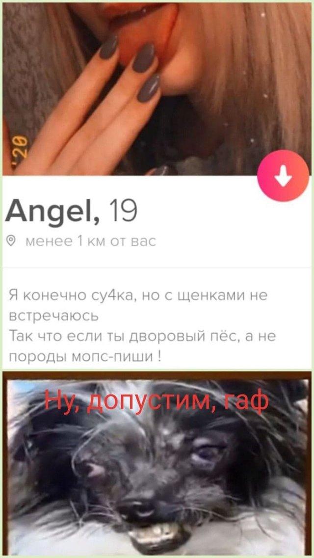 Энжел о собачках