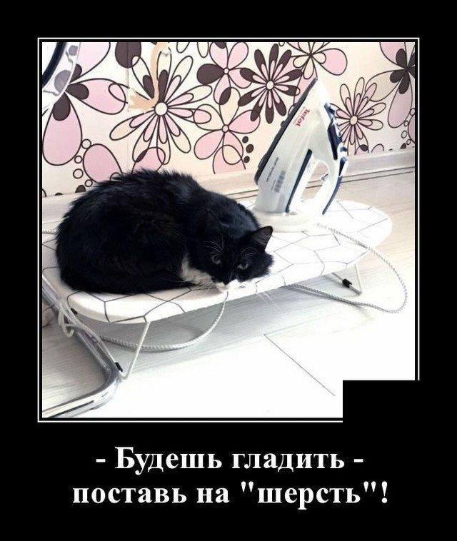 205921_20_trinixy_ru.jpg