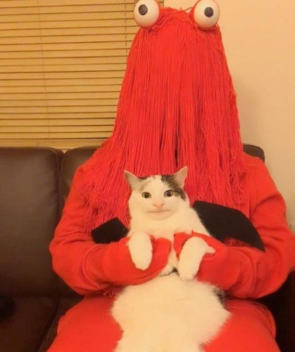 Какой хозяин, таков и кот