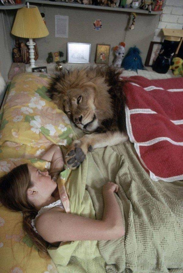В постели со львом...
