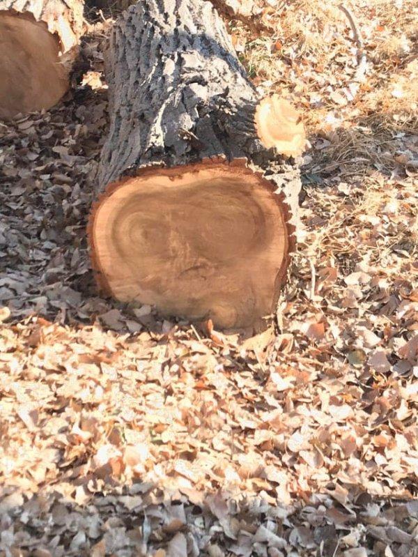 Инопланетянин на спиле дерева