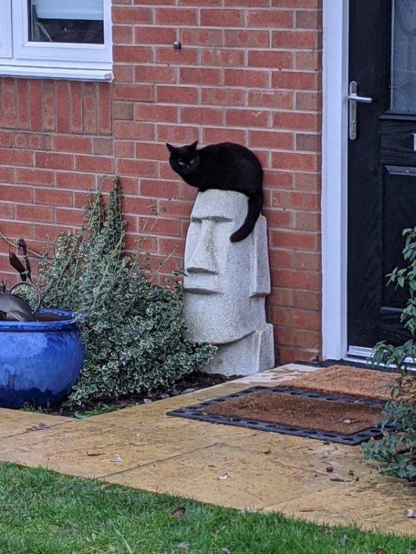 Кот сел на статую, и теперь она похожа на Элвиса