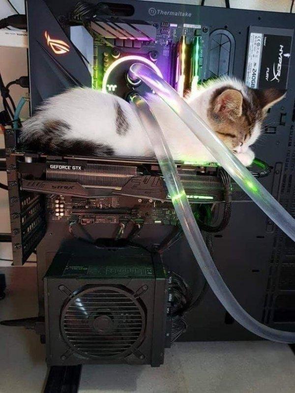 Тепленькая видеокарта - отличное место для кота