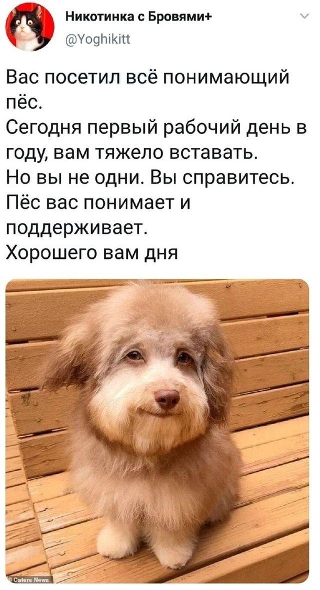 твит про пса