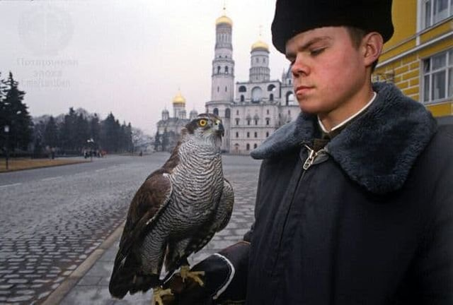 Солдат держит на руке ястреба