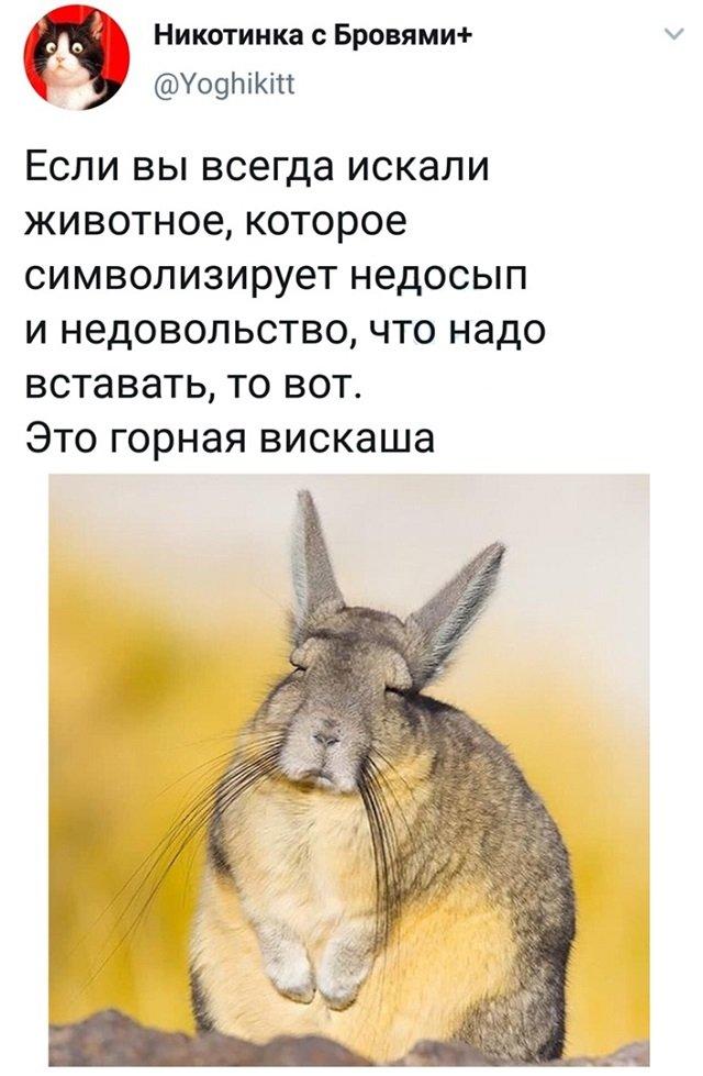 твит про животное