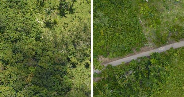 Ураган Мария нанёс ущерб лесам в Пуэрто-Рико