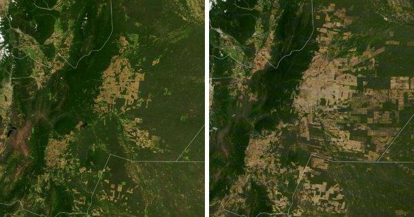 Исчезновение лесов в регионе Гран-Чако, Южная Америка