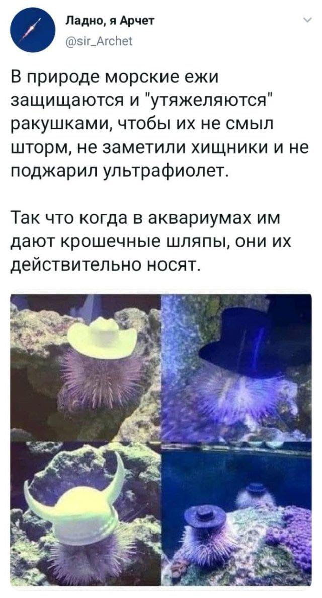 твит про морских ежей