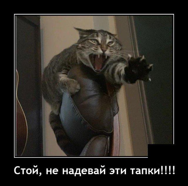 Демотиватор про кота и тапки