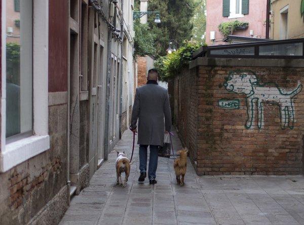 Собачий переулок