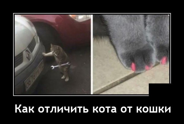 Демотиватор про кота и кошку