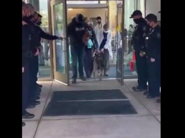 Полицейские встречают раненого пса из K-9