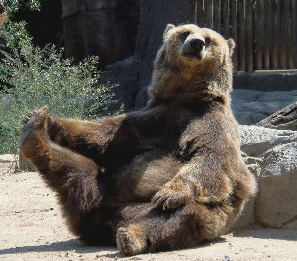 Медведи умнее, чем нам кажется