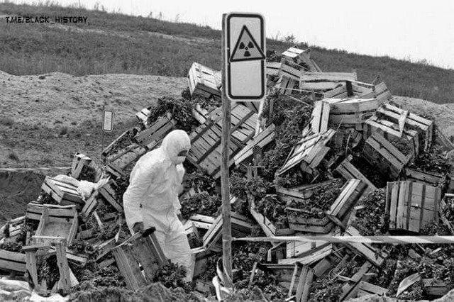 Рабочий в Германии выбрасывает овощи после Чернобыльской катастрофы, 1986 год.