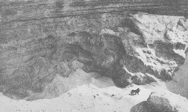 Фото последнего жившего на свободе берберийского льва. Был застрелен в марокканской части Атласских гор в 1922 году. Сегодня является вымершим в дикой природе.
