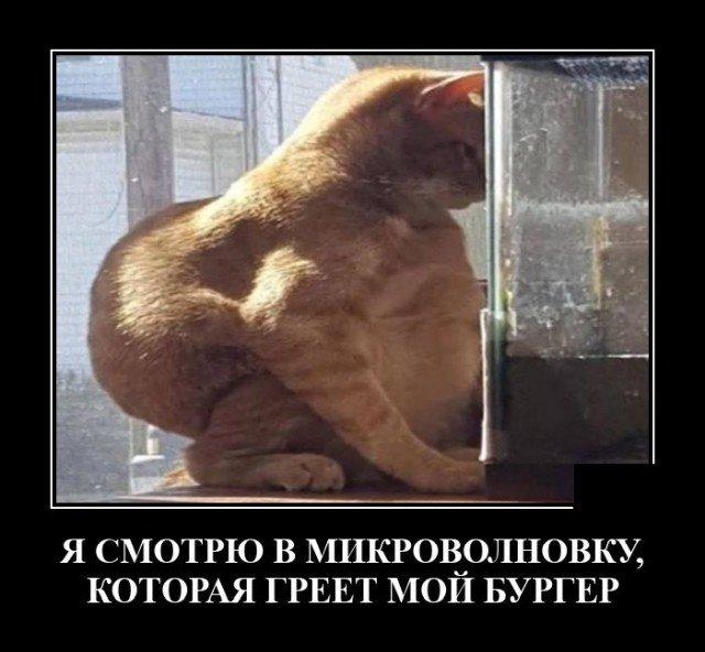 Демотиватор про толстого кота