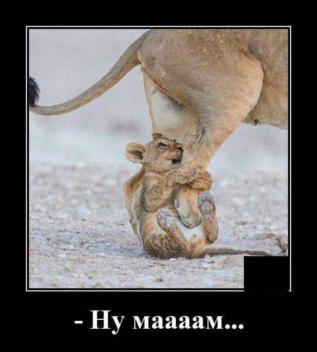 Демотиватор про маму