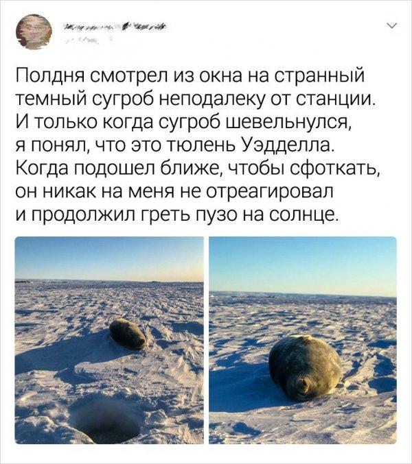 твит про тюленя