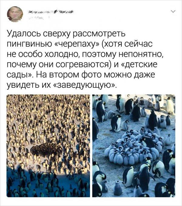 твит про пингвинью черепаху
