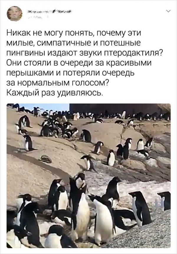 твит про пингвинов