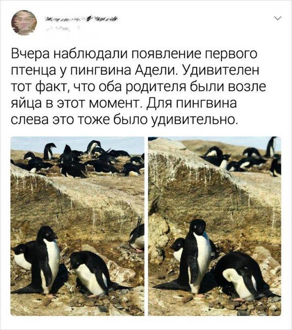 твит про птенца