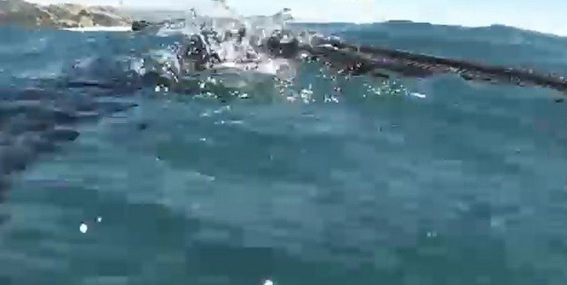 В Новой Зеландии акула выхватила добычу у 18-летнего рыбака