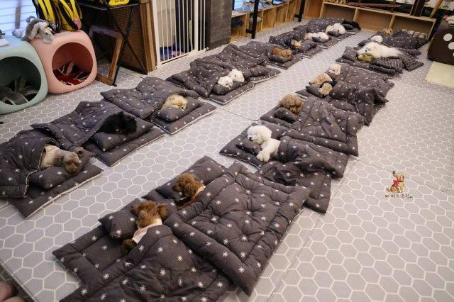 Еще в Корее есть детский сад для собак