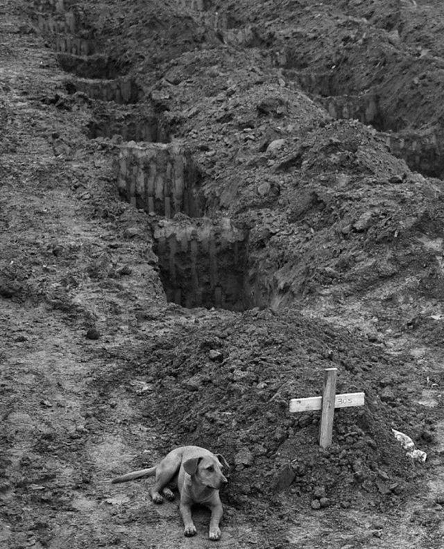 Собака по кличке Лео сидит в течение двух дней у могилы хозяина, который погиб во время оползня в Рио-де-Жанейро, 2011 год.