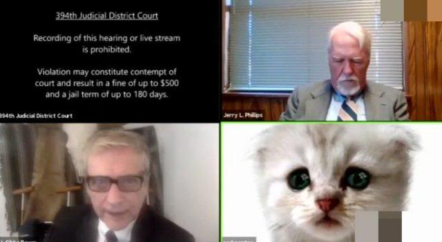 Заседание суда превратилось в видео с котиками из-за адвоката