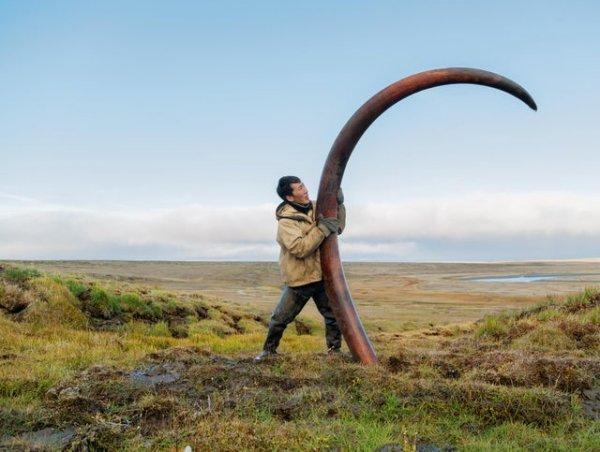 Бивень мамонта, которому 12000 лет