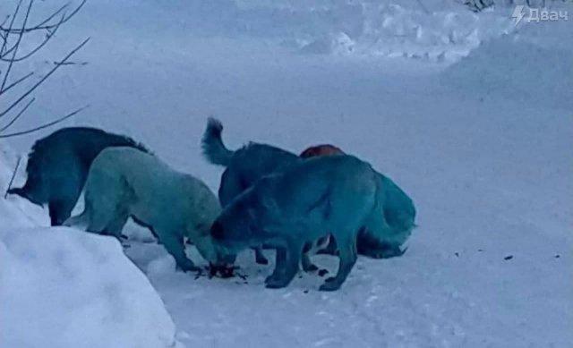 В Дзержинске и Подольске заметили разноцветных собак