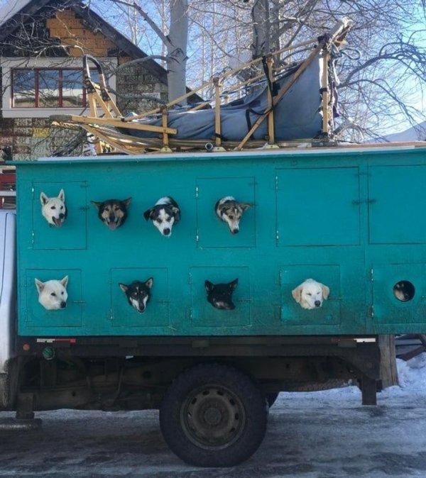 Грузовик для перевозки ездовых собак, Колорадо