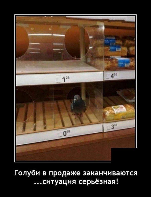 Демотиватор про голубя