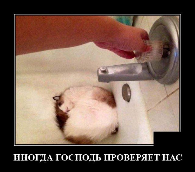 Демотиватор про проверку
