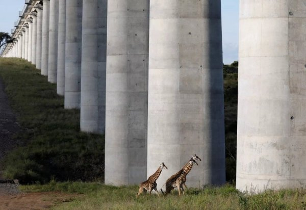 Железнодорожный мост в национальном заповеднике Найроби, Кения
