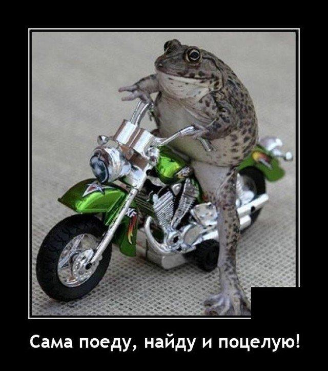 Демотиватор про жабу