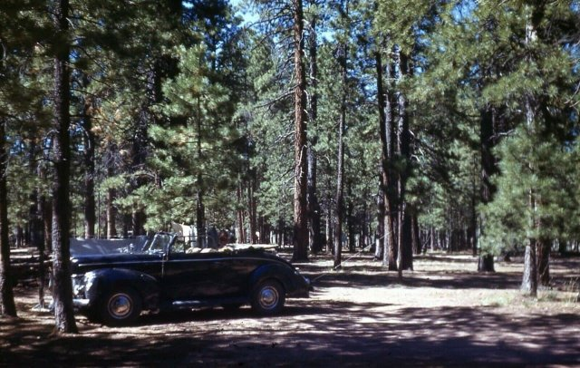 Отдых во время поездки в Большой каньон, Аризона. 1947 год.