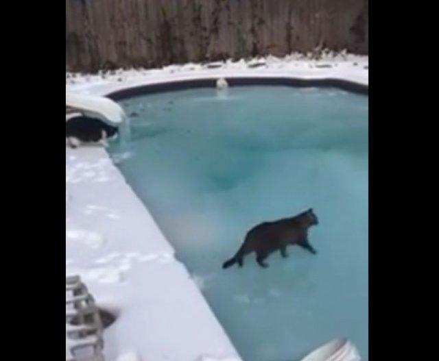Коты, живущие в Техасе, не понимают, что происходит вокруг