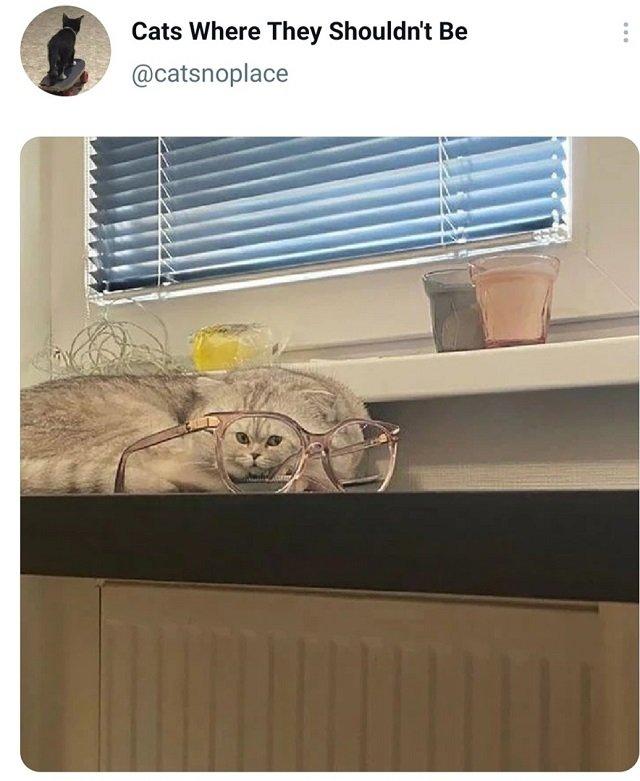 твит про кота в очках