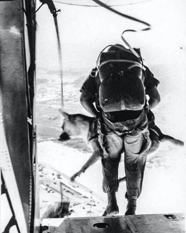 Сержант и его служебный пес совершают прыжок с парашютом. Вьетнам, 1968 год.