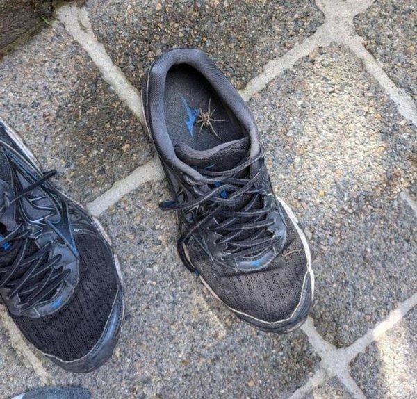Правило австралийца №8: всегда проверяй обувь