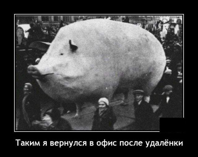 Демотиватор про свинью