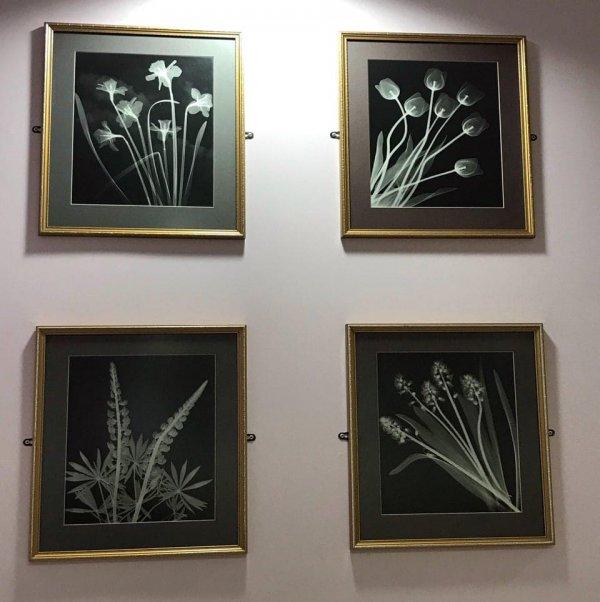 Украшения в кабинете радиологии это рентгеновские снимки цветов